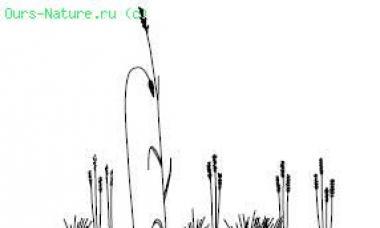 Характеристика почвенной среды