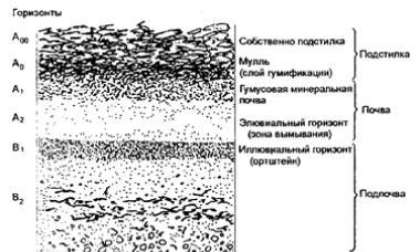 Почва как среда жизни - основные среды жизни