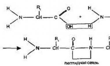 Неорганические вещества клетки