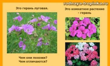 Рассказ о лекарственных растениях