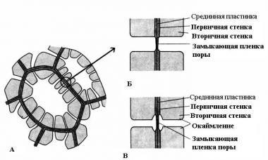 Клеточная стенка растений состоит из целлюлозы